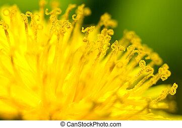 jaune, étamines