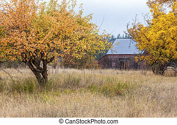 jaune, arbres, barnyard.