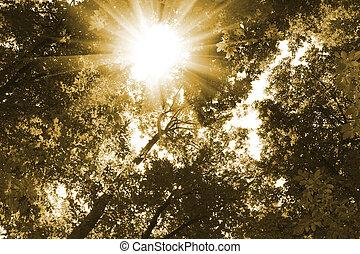 jaune, arbres, lumière soleil, forêt
