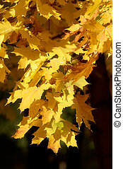jaune, branche