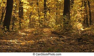 jaune, brouillé, automne, bas., fin, paysage., ground., prise vue., foyer., arrière-plan., appareil photo, tomber, voyante, nature, sélectif, en mouvement, automne, bois, octobre, feuilles, forest., feuillage, doux