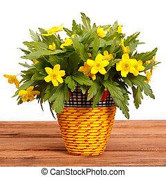 jaune, celandine