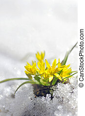 jaune, fleur source
