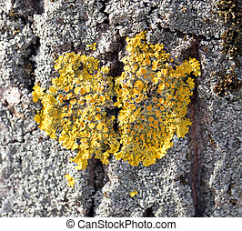 Grand arbre jaune coing photographie de stock rechercher des images et des photos clipart - Mousse sur les arbres ...
