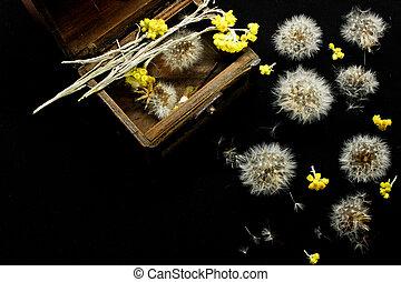 jaune, pissenlits, arrière-plan noir, petit, fleurs