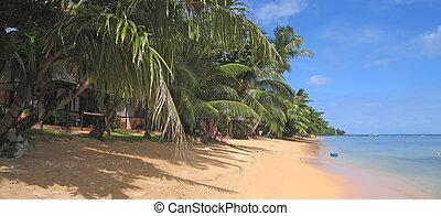 jaune, plage sable, à, palmiers, curieux, boraha, sainte, île, madagascar, panoramique