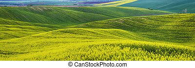 jaune, printemps, rapeseed, champs