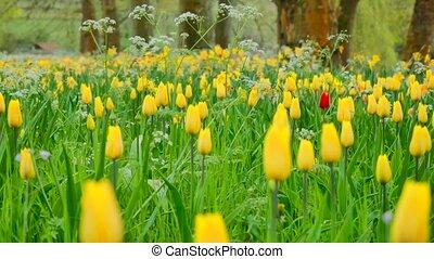 Fleur Champ Jaune Artichaut Croissant Jérusalem Fleur