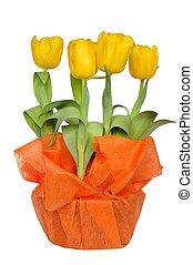 jaune, tulipes