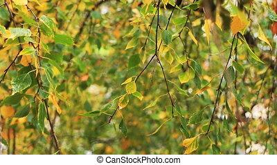 jaune-vert, feuilles, mouillé