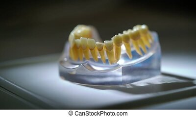Jaw in dental clinic - Jaw tooth in dental clinic
