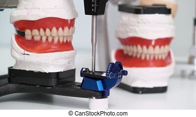 Jaw model in dental clinic