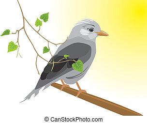 Jay and birch sprig. Vector illustration