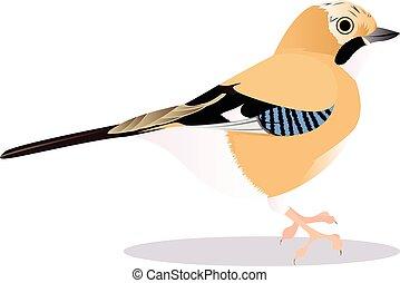 Jay birdcartoon vector illustration