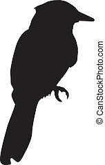 jay - silhouette of jay