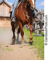 jeżdżenie, koń, western