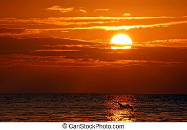 jeden, překrásný, východ slunce, dále, sanibel ostrov, florida