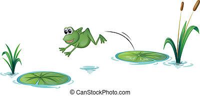 jeden, skákání, žába