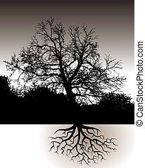 jeden, strom, s, kořeny, krajina