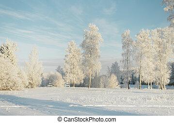 jedle, hynout, mráz, sněžit, kopyto, forest., bojiště, pokrytý
