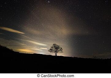 jednorazowy, drzewo, i, gwiaździste niebo
