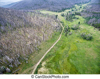 jeep trail and forest after wildfire