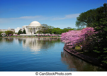 Washington DC - Jefferson national memorial with cherry ...