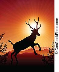 jeleń, ib, zachód słońca, tło