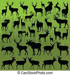 jelen, los, a, hromada čeho ovce, rohatý, živočichy, vektor