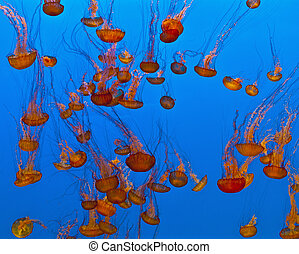 jelly fish in the blue sea