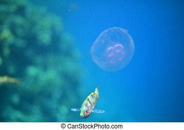 Jellyfish and fish