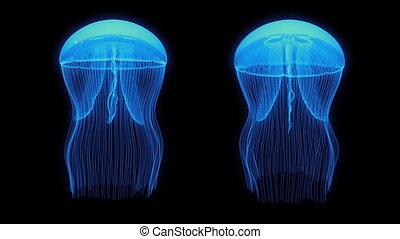 Jellyfish Assets Loop Blue Black