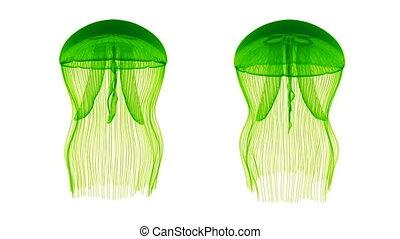 Jellyfish Assets Loop Green White