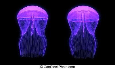 Jellyfish Assets Loop Purple Black