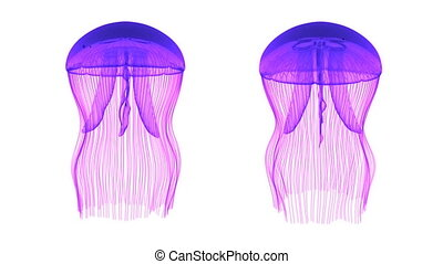 Jellyfish Assets Loop Purple White