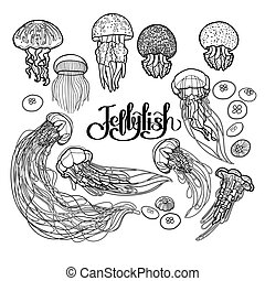 Jellyfish in line art style - Jellyfish drawn in line art...