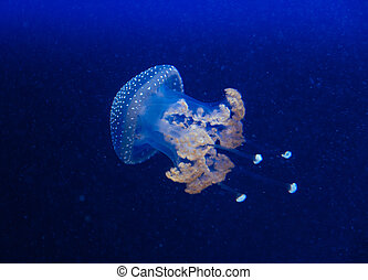 Jellyfish in the deep blue ocean with bright illuminance - ...