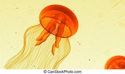Jellyfish Nightlights Orange White