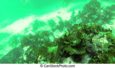 Jellyfish swimming - Jellyfish swimming under the sea