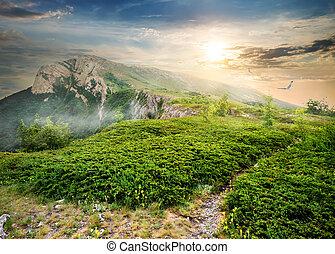 jeneverstruik, in, bergen