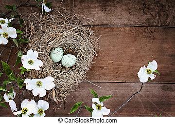 jerarquía del pájaro, y, huevos, con, blanco, florecimiento, dogwood, flores