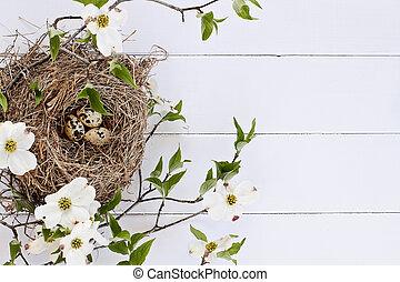 jerarquía del pájaro, y, huevos, con, blanco, florecimiento, dogwood