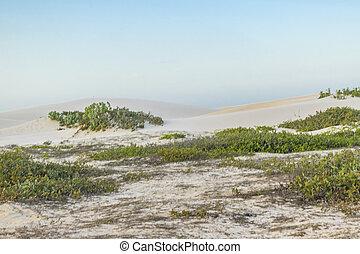 Landscape scene of dunes at Jericoacoara National Park in Brazil