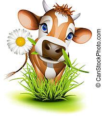 jersey koe, in, gras