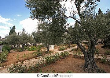 Jerusalem-Garden of Gethsemane