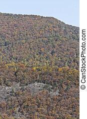jesień, appalachian, barwne góry