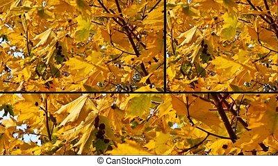 jesień, collage