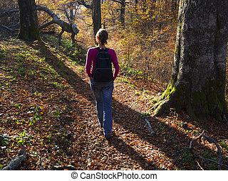 jesień, dosiadajcie, przedimek określony przed rzeczownikami, las