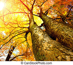 jesień, drzewa., upadek