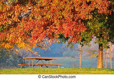jesień, drzewo, ława